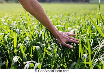 婦女的, 向上, 手, 触, 綠色, 關閉, 草