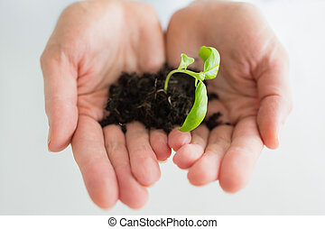 婦女藏品, a, 很少, 植物