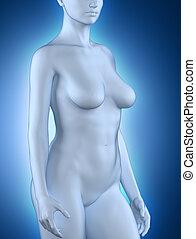 婦女, 在, 解剖, 位置