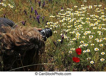 婦女, 攝影師, 在, the, 野花