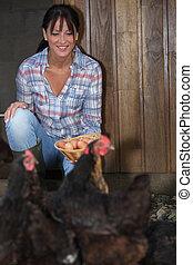 婦女, 收集, 新鮮, 母雞, 蛋