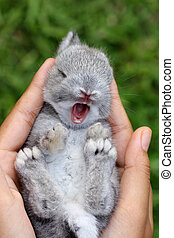 嬰孩, 灰色的兔子, 在, 草