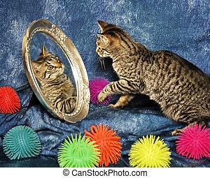 子ネコ, 中に, a, 鏡