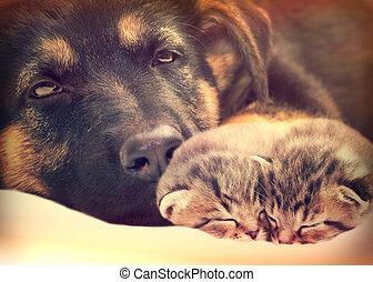 子ネコ, 子犬, 睡眠