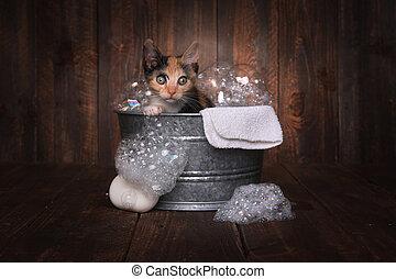 子ネコ, 得ること, 手入れをされる, 浴室, washtub, 泡