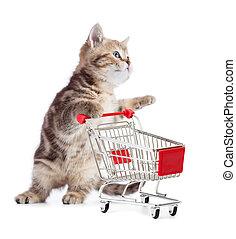子ネコ, 買い物, 隔離された, カート, ねこ