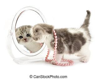 ∥, 子ネコ, 顔つき, 中に, a, 鏡