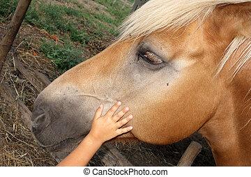 子供, ∥あるいは∥, 子供, 手, 元気づけるようである, ∥あるいは∥, 攻撃する, 頭, 馬, 中に, 避難所