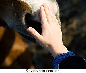 子供, そして, 馬