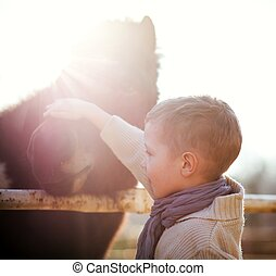 子供, なでること, 子馬, 愛, そして, 愛情