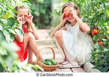 子供, 大きい, 温室, 手, 肖像画, トマト