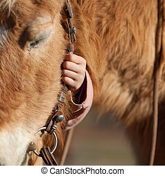 子供, 手の 保有物, 馬, 手綱