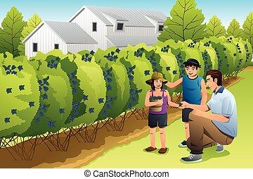 子供, 父, ブルーベリー, 収穫する