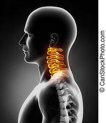 子宮頸脊椎, 解剖學, 側面的風景