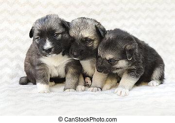 子犬, グループ, 新生