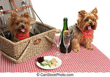 子犬, 上に, ピクニック