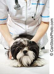 子犬, 医者