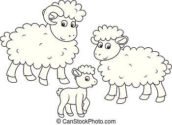 子羊, ram, sheep