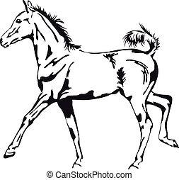 子馬, 得意である, ベクトル, 黒, 白, アウトライン