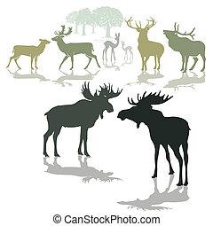 子鹿, 鹿, オオシカ