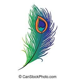 孔雀の 羽, plume, drawing., カラフルである, イラスト, ベクトル, 手