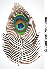 孔雀, 抽象的, 羽