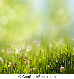 季節的, 夏, 牧草地, 美しさ, 抽象的, 背景, 花, 咲く