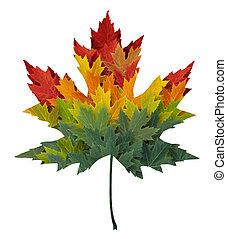 季節的, 葉, かえで