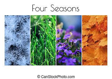 季節, 冬, 夏, 花, concept:, コラージュ, 4, 群葉, 春, 草, 雪, autumn.