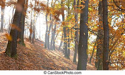 季節, 森林, 秋