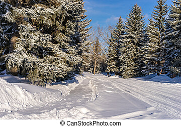 季節, 歩道, 冬