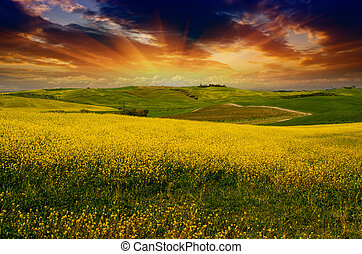 季節, 牧草地, トスカーナ, 風景, 春