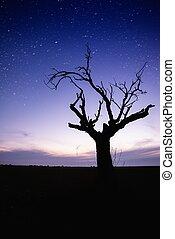 孤独, シルエット, 星が多い, 上に, 木, 空