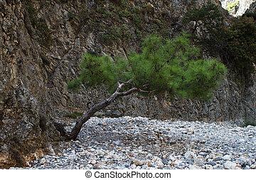 孤独, 木