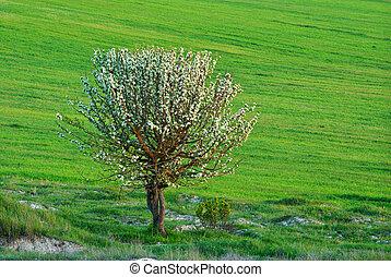 孤独, 木, 牧草地