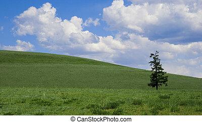 孤独, 松, 上に, 緑のフィールド