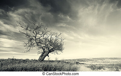 孤独, 树