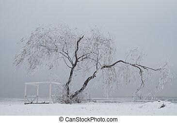 孤独, 树, 在中, 冬季