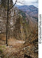 孤独, 树, 在中, 山地形