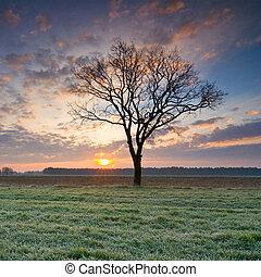 孤独, 树, 在中, 金色, 日出
