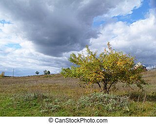 孤独, 秋季, 树, 在中, 领域