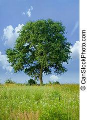 孤立した, 木