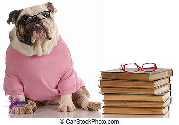 学校, モデル, ブルドッグ, -, 犬, 服従, ∥横に∥, 本, 英語, 山