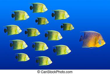 学校, 概念, 大きい魚, -, トロピカル, リーダーシップ, 先導, 魚