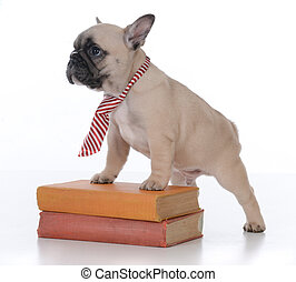 学校, 犬, 服従