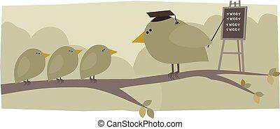 学校, 鳥