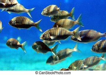 学校, fish