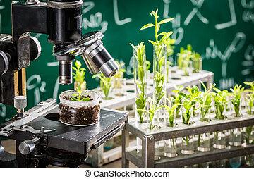 学者, 実験室, テスト, の, 殺虫剤, 上に, 植物