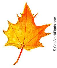 孩子, 圖畫, -, 秋天, 黃色的楓樹葉片