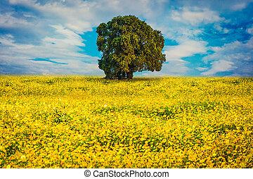 宇宙の花, 黄色, 通り道
